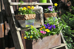 Gardening decorating flower spring Stock Images