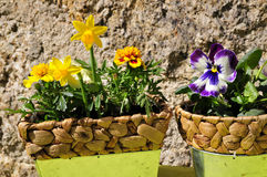 Gardening decorating flower spring Royalty Free Stock Photo
