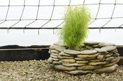 Gardening Decoration Stock Images