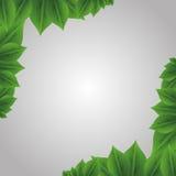 Gardening design Stock Images