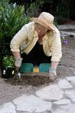 Gardening - digging hole for new plant Stock Images