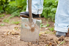 Gardening - digging over the soil Stock Photography