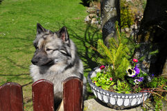 Gardening Dog fence Royalty Free Stock Images