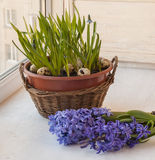 Gardening Easter composition window Royalty Free Stock Photos