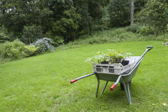 Gardening in England wheelbarrow Royalty Free Stock Image