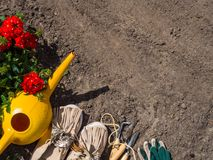 Gardening - Equipment For Gardener With Flowerpot geranium. Copy space stock photography