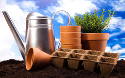 Gardening equipment with plants, vivid bright springtime concept Royalty Free Stock Photos