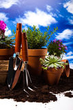 Gardening equipment with plants, vivid bright springtime concept Stock Photo