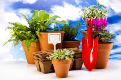 Gardening equipment with plants, vivid bright springtime concept Stock Photos