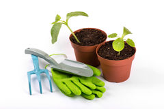 Gardening equipment and potted plants isolated on white Royalty Free Stock Photo