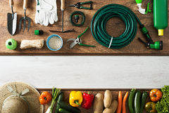 Gardening and farming banner. Gardening and farming tools on a wooden table and freshly harvested vegetables, blank copy space, top view Stock Photo