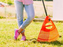 Woman using rake to clean up garden lawn Royalty Free Stock Images