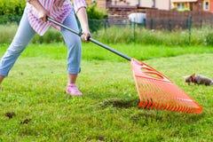 Woman using rake to clean up garden lawn Royalty Free Stock Image
