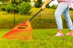 Woman using rake to clean up garden lawn Royalty Free Stock Photo