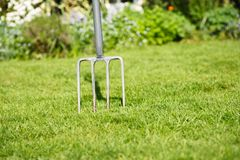Gardening fork. Garden lawn with a fork stuck in the grass, to depict aerating the lawn Stock Photos