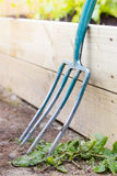 Gardening fork against raised bed Royalty Free Stock Images