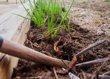 Gardening fork and seedlings Stock Images
