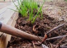 Gardening fork and seedlings Stock Images