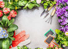 Gardening frame with garden tools , fresh lovely garden flowers in pots Royalty Free Stock Photo
