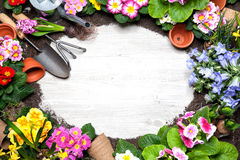 Gardening. Frame of spring flower and gardening tools on old wooden background Stock Images