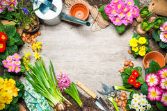 Gardening. Frame of spring flower and gardening tools on old wooden background Royalty Free Stock Image