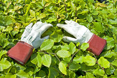 Gardening Glove on green leaf royalty free stock images