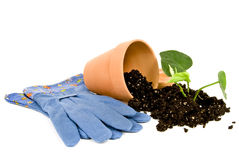 Gardening Gloves With Plant Soil and Flower Pot Stock Image
