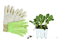 Gardening gloves and plants. Isolated on white Royalty Free Stock Images