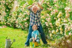 Gardening - Grandfather gardener in sunny garden planting roses. Gardener in the garden. Senior man with grandson. Gardening - Grandfather gardener in sunny royalty free stock photo