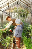 Gardening with granny Royalty Free Stock Image