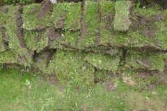 Gardening, grass pieces, grass sods transplant royalty free stock image