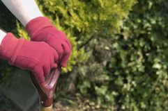 Gardening hands. Close up of hands of woman wearing gardening gloves stock image