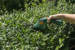 Gardening hedge cutting Stock Photo