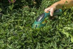 Gardening hedge cutting Stock Photos