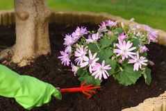 Gardening for a hobby Stock Photo