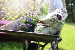 Gardening, hobby and passion. Stock Images