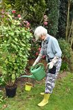 Gardening, hobby of a senior woman stock images
