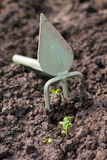 Gardening. Hoe and sprout. Gardening. Hoe and  sprout at ground Royalty Free Stock Image