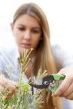 Gardening at home Stock Photo