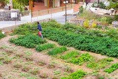 Gardening on household plot in Village Bali, Crete Royalty Free Stock Image