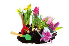 Gardening In Spring Stock Photos