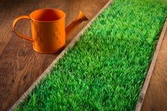 Gardening indoors Royalty Free Stock Photo