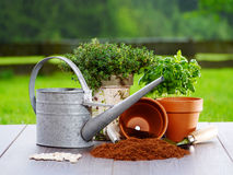 Gardening items. Photo shows gardening items like watering can, seed, growing media, plants, garden fork and scoop Stock Image