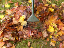 Gardening Jobs. Rake Clearing Leaves in Garden royalty free stock photo