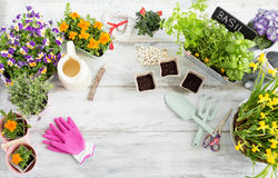 Gardening kit on table Royalty Free Stock Photos