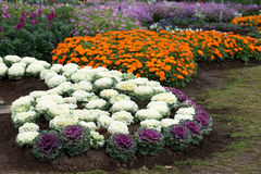 Gardening and landscaping Stock Image