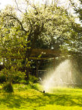 Gardening. Lawn sprinkler spraying water over grass. Royalty Free Stock Images