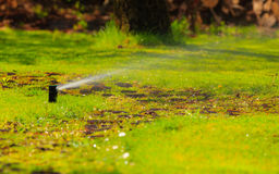 Gardening. Lawn sprinkler spraying water over grass. Stock Image