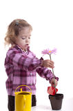 Gardening little girl planting a pink flower Stock Images