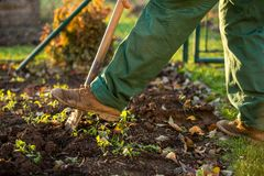 Gardening - man digging the garden soil with a spud. Shallow DOF; selective focus royalty free stock image